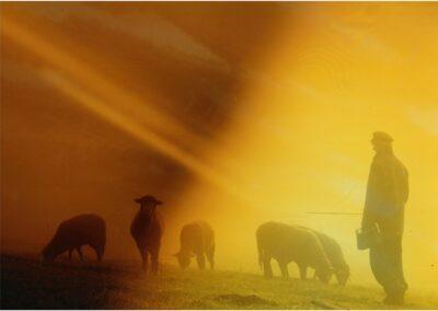 Schafsherde - Bild von Karin Günther