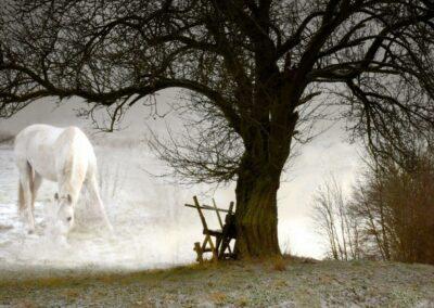 Pferd im Nebel- Bild von Karin Günther und Werner Baur
